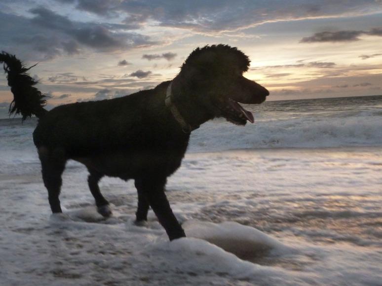 Kahlua.Beach.2.